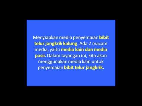 Budidaya Jangkrik Kalung Dengan Bibit Telur Media Kain 2