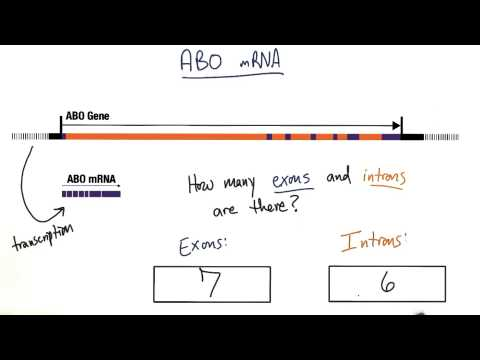 Exons and Introns - Tales from the Genome