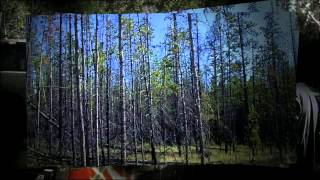 Chilcotin Silviculture Group