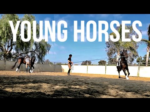 How To Train The Young Horse BASICS