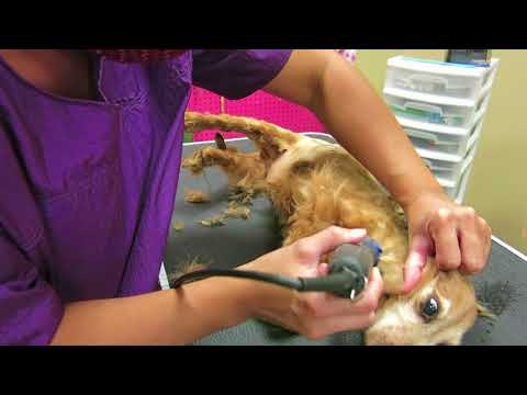 How to groom a disabled dog (spinal injury)