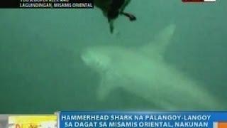 NTG: Hammerhead Shark na palangoy-langoy sa dagat sa Misamis Oriental, nakunan ng YouScooper