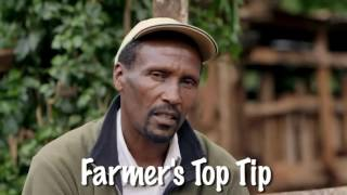 Shamba Shape Up Sn 06 - Ep 3 Seedlings, Fertilisers, Seed Selection (English)