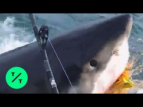 Great White Shark Steals Bait From Fishermen In New Jersey