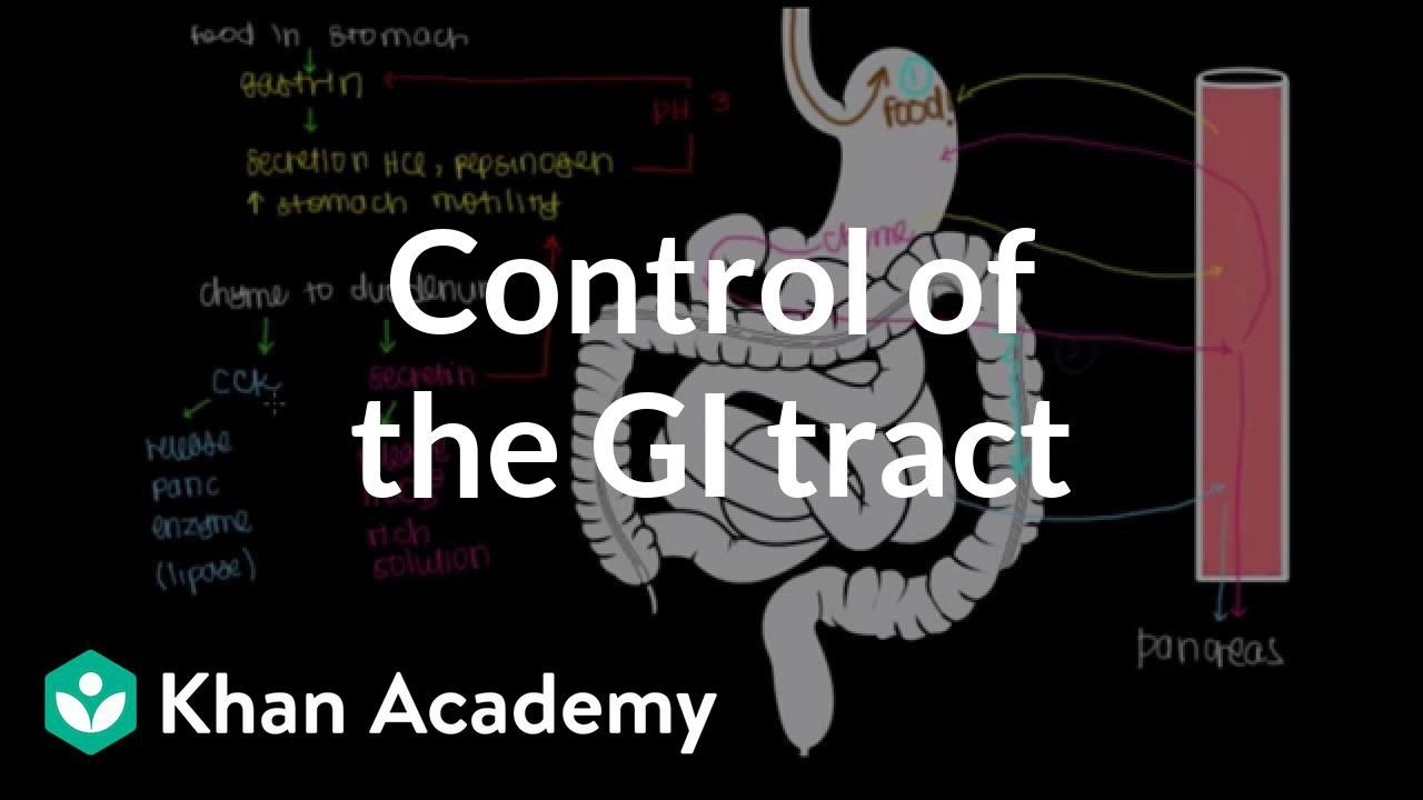 Control of the GI tract | Gastrointestinal system ...