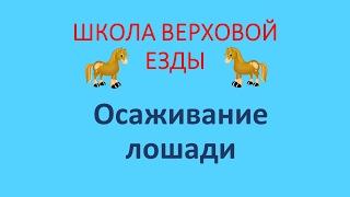 Осаживание лошади