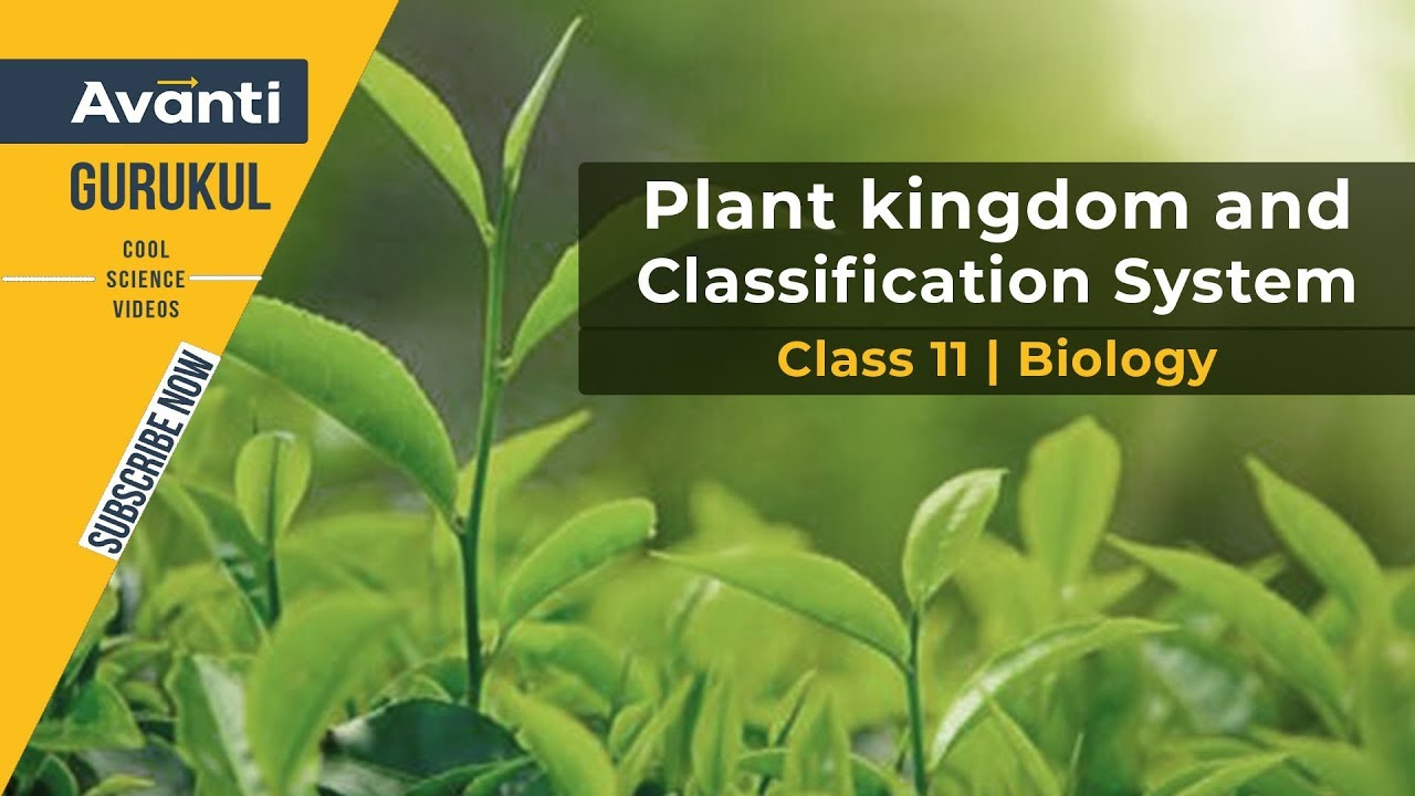 Plant kingdom & Classification system | Plant Kingdom | Class 11 Biology |  Urvashi Mam