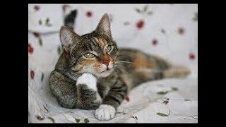 Коты и планшет!!!