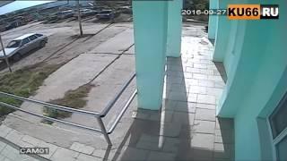 Неизвестные расстреляли собаку (18+)
