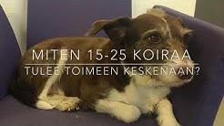 Koiraparkki.com Kamppi - Koirapäiväkoti