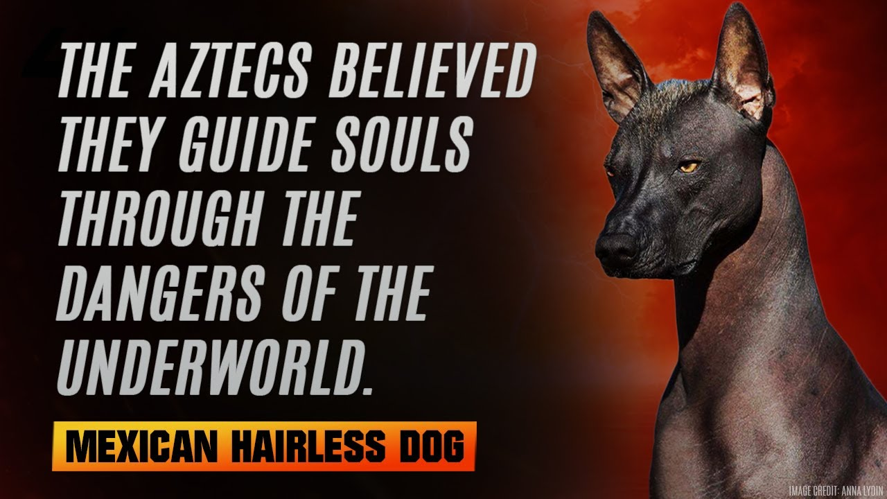 10 Of The Most Interesting-looking Dog Breeds