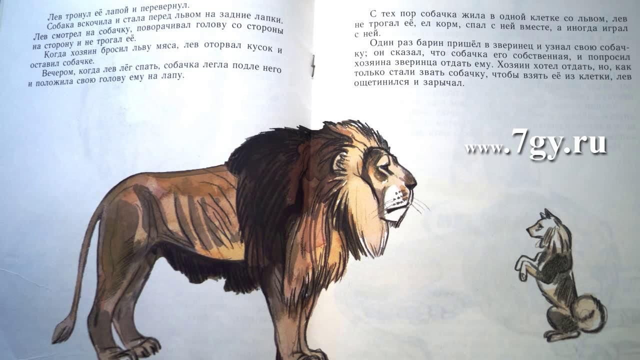 Лев Толстой. Лев и собачка. Быль - YouTube