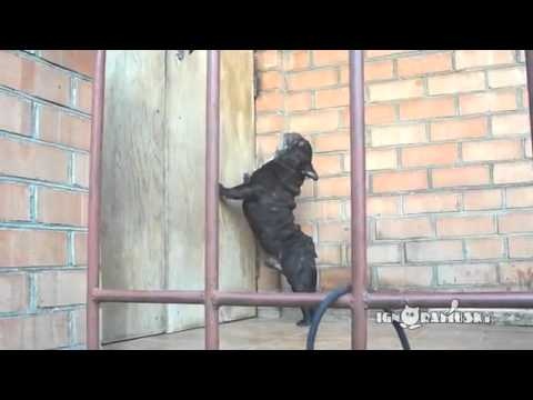 LOL: Weird Barking Dog Wants Someone To Open The Door!