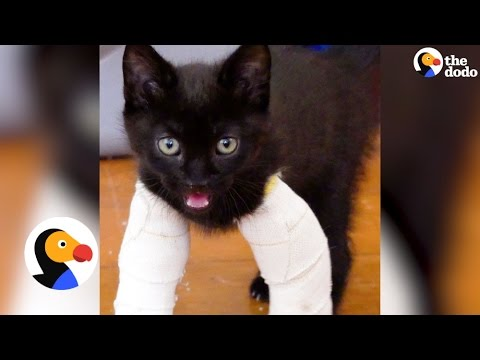 Kittens With Twisted Legs Get Tiny Casts | The Dodo