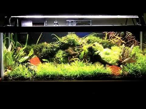 Stargrass in my 20 gallon long planted aquarium youtube for 20 gallon long fish tank
