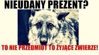 Nieudany prezent? To nie przedmiot tylko zwierze!  Kanał Youtube: Bo To Polska Jest botopolskajest