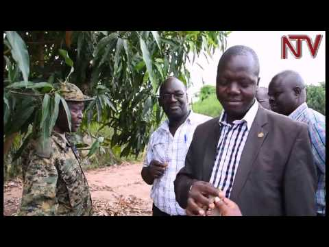 MPs recommend promotion of irrigation as part of Operation Wealth Creation
