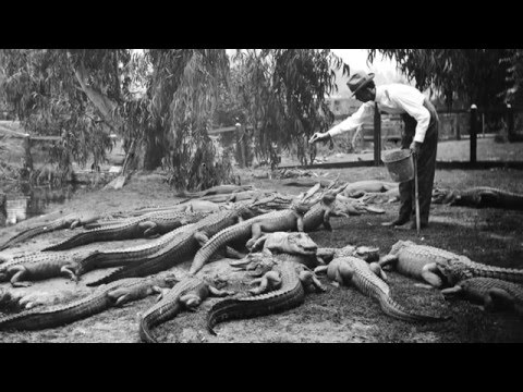 Los Angeles Had an Alligator Farm?