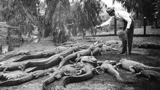 Photos Of Los Angeles Alligator Farm