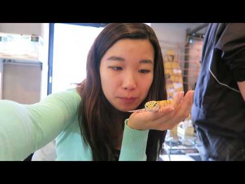 ROCKSTAR Reptile Cafe - 爬虫類カフェJAPAN