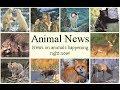 Animal News: Pinocchio Lizard Rediscovered!