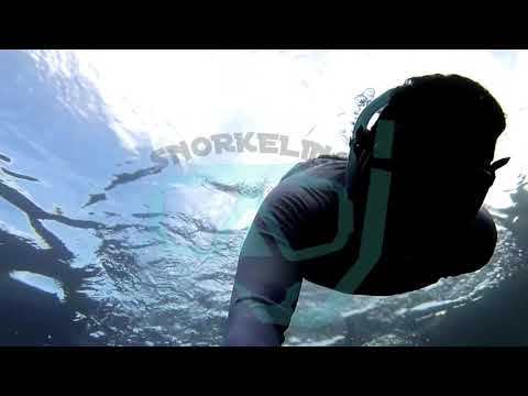 Snorkeling di pantai Sulamadaha Ternate