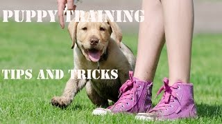 Puppy Training-Potty Training Puppies Tips And Tricks