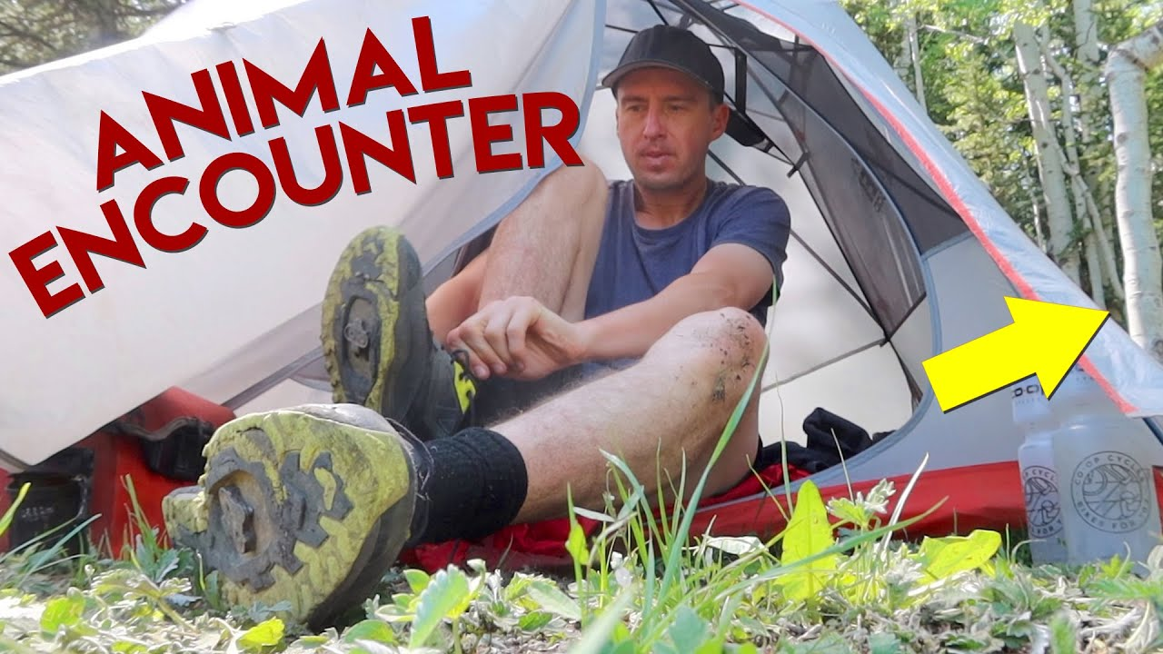 Noises Outside My Tent 🙀 - SCARED & ALONE in the Middle of the Forest