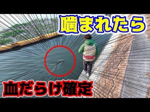 冬に夏定番の怖そうなあの魚が釣れた!