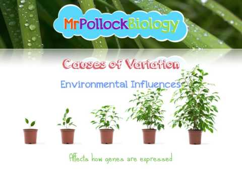 Variation - Causes and Types