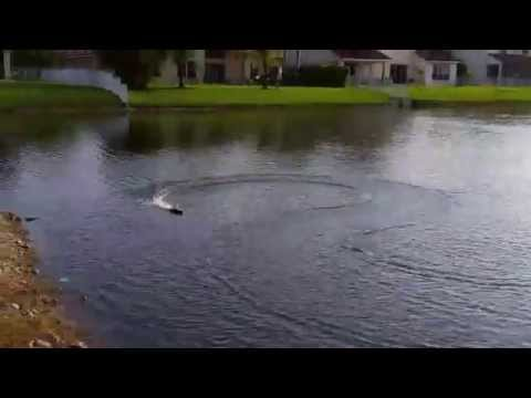 UDI Venom RC Electric Boat Racing In Lake - Pembroke Pines, Broward County, Florida