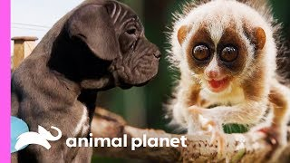 🔴 The Cutest Baby Animals on Animal Planet!