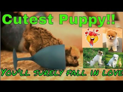 Amazing Dog Video Compilation - Extremely Cute and Adorable Puppy