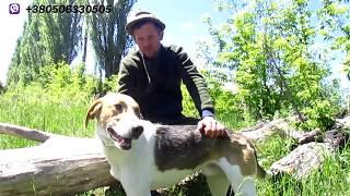 О нагонке гончих собак при помощи gps трекера tkstar