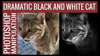 Dramatic black and white cat, photoshop manipulation.