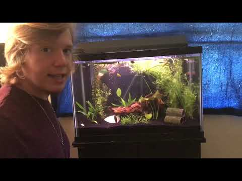 Removing Ammonia From Your Fish Tank  *THE SILENT KILLER* (New Fish!!!)