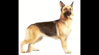من اعجب القصص  في التاريخ-قصة الكلب الذي اماته الله 309 عاما ثم بعثه-سوف تعجبك كثيرا