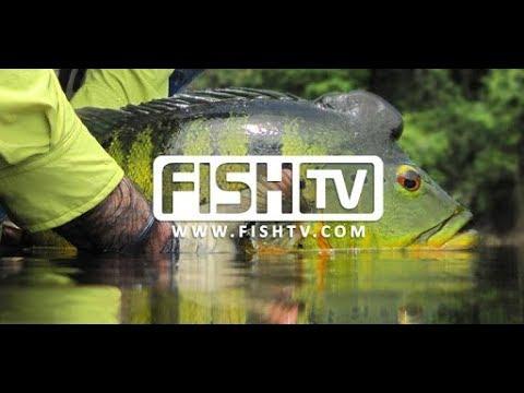 FISH TV AO VIVO | Se inscreva no nosso Canal