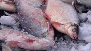 Ловля ЛЕЩА зимой / Рыбалка, которая остаётся в памяти навсегда!