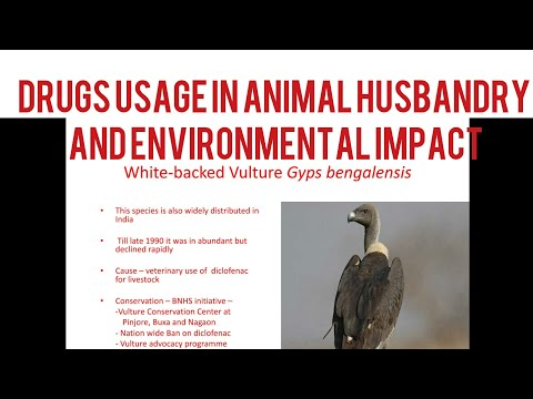 Drug Usage in Animals and Impacts Thereof