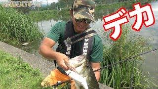 必ず釣れるビッグベイトを使ったら拳が楽に入る怪物釣れた!!!!バケモンすぎ