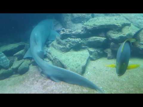 Ushaka Marine World_ Aquarium- (Part 2)