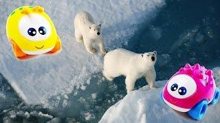 Машинки Бобби и Лило. Опасности Северного и Южного полюсов. Животные Арктики и Антарктики