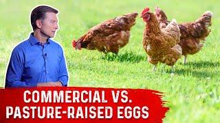 Commercial Eggs vs Pasture Raised Eggs