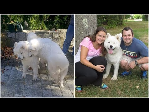 Spirit of love shines when two madly in love dogs reunited again