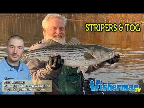 HOT STRIPER BITE! - November 21, 2019 New England Fishing Report