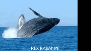 Download REX RABANYE - Falling leaves MP3 song and Music Video