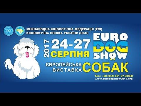 Euro Dog Show 2017 - 25.08.2017