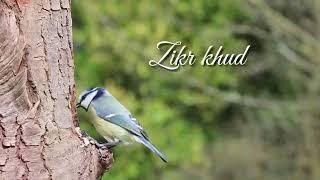 hashbi-rabbi-jallalah-whatsapp-status-islamic-status