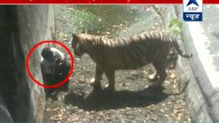 Tiger brutally kills youth in Delhi zoo: Negligence by zoo officials?